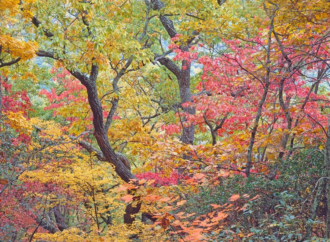 Blue Ridge Autumn #3