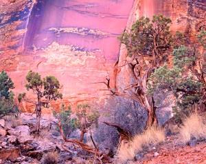 Desert Varnish Canyonlands