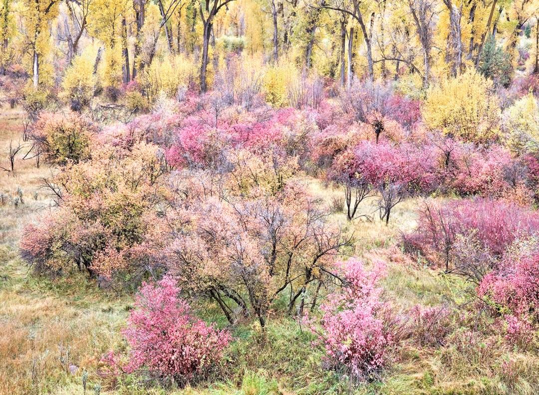 Swan Valley Autumn Portrait #2