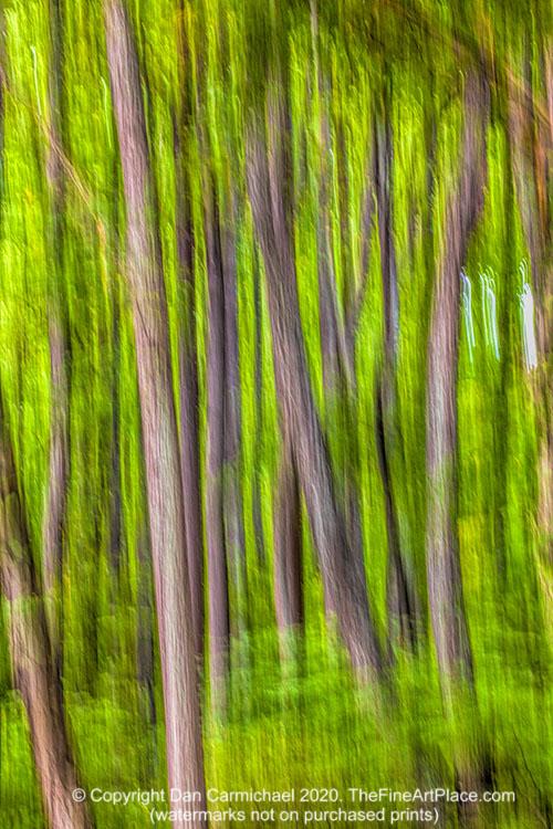 Tree trunks in the Blue Ridge Mountains of North Carolina