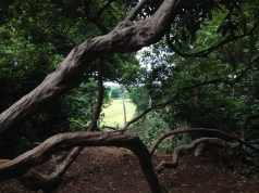 View through the woods