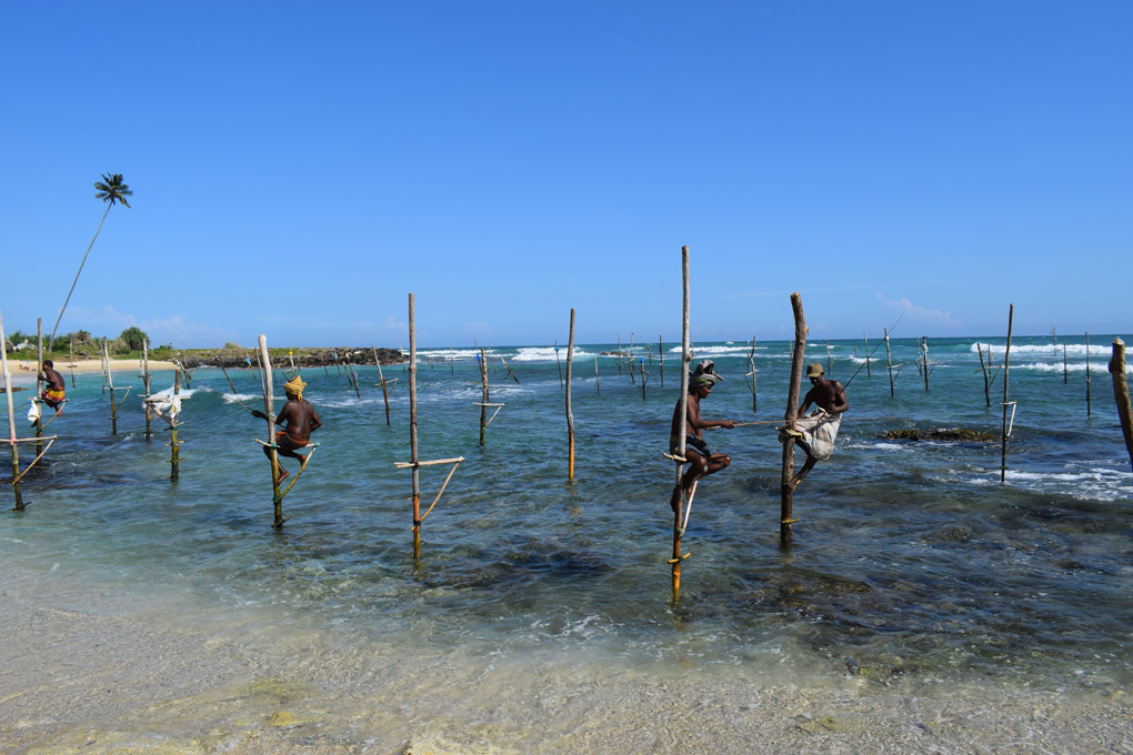 Sri Lanka; Weligama; Stilt Fishermen
