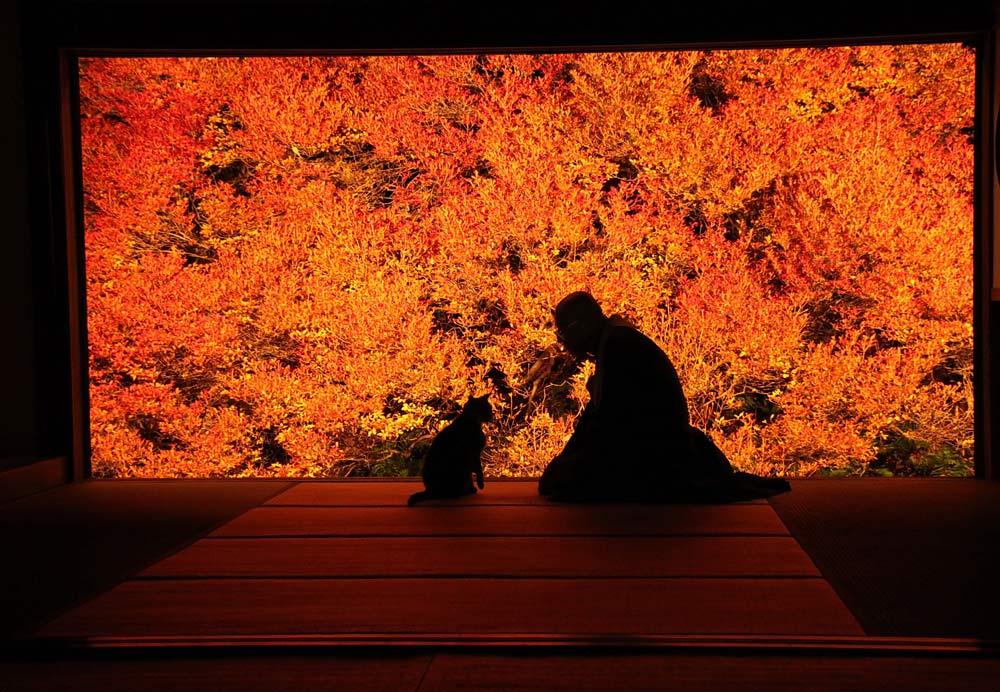 Kinosaki Onsen, Visit Kinosaki, Japan, Spa town, Ankokuji Temple
