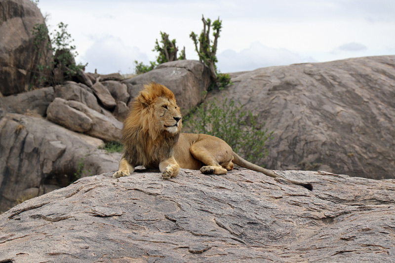 Serengeti, Africa, Classic Safari Company, Maasai Wanderings, Nasikia Camps