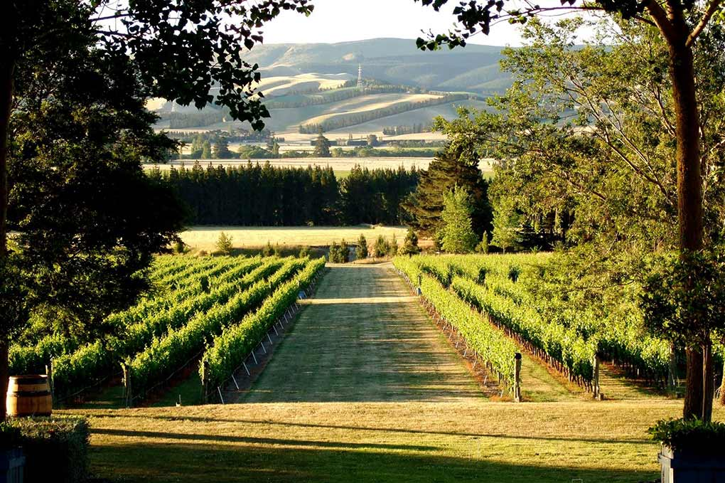 wine tasting, wine tasting Queenstown, Pure New Zealand, Mountford Estate