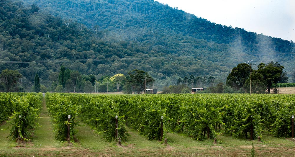 King Valley, Victoria, wine makers
