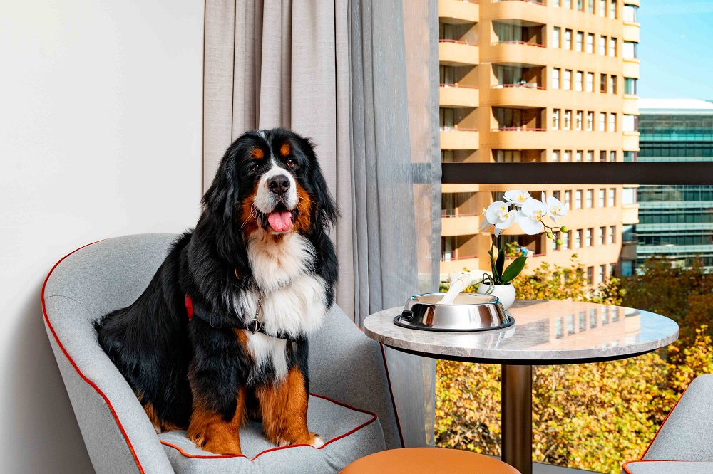 International Dog Day, fur baby, Crowne Plaza Darling Harbour
