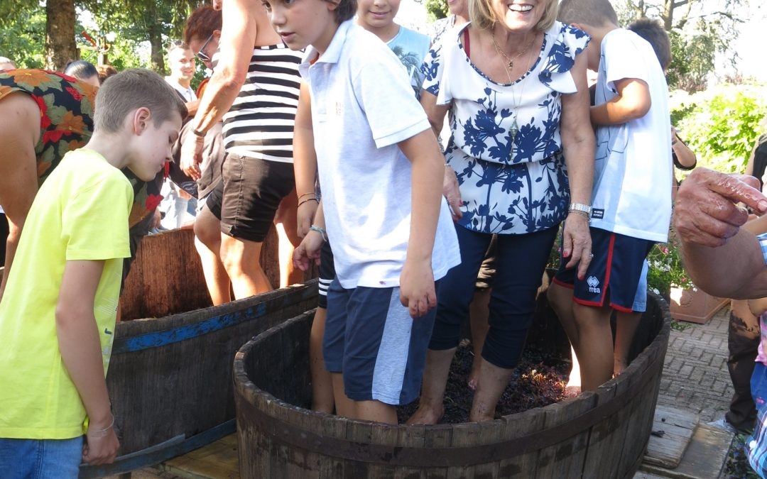 People stomping on grapes to make wine