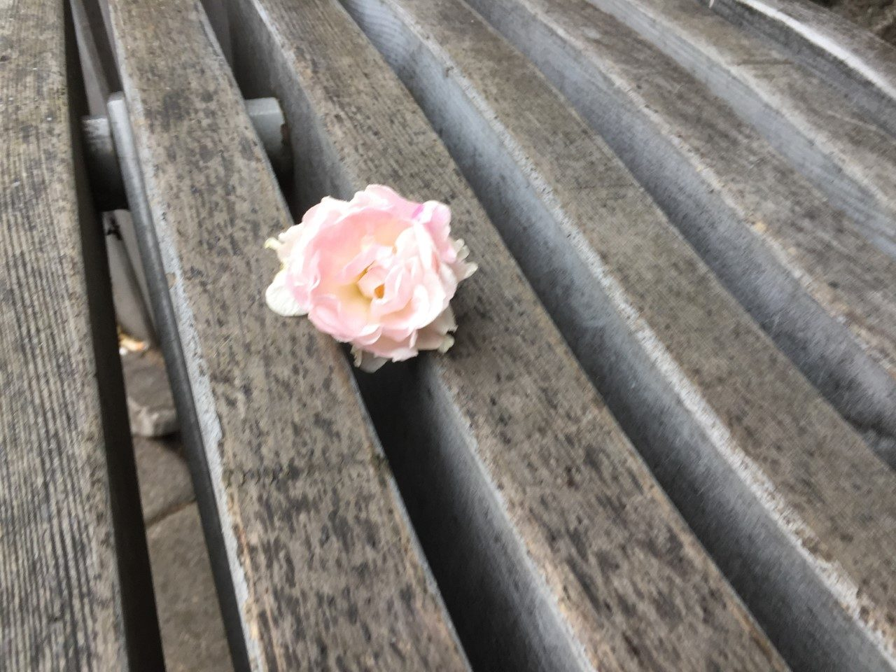Writing prompt: A wooden table. Slanted slats like prison bars. A flower blossoming, poking through.