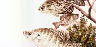 Crappie_Fishing_Tips