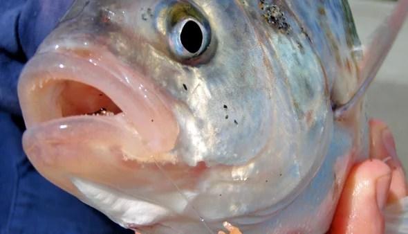 Perch Fishing Tips