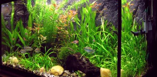 Importance of A Good Aquarium Shape