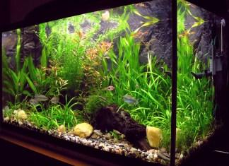 Importance of A Good Aquarium Shape