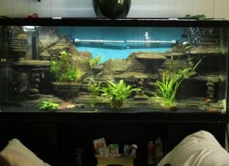 Best Tips On Aquarium Cements