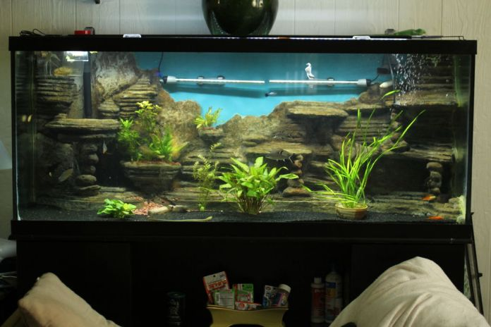 Best Tips On Aquarium Cements