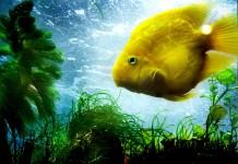 Aquarium Temperature and Heating
