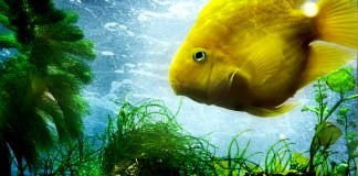 Aquarium Temperature and Heating