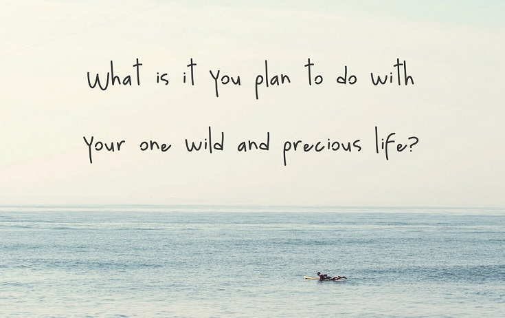 what is it you plan to do with your one wild and precious life.jpg