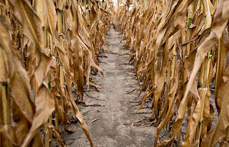 Texas' agriculture industry has lost nearly $8 billion since drought conditions began in 2011.