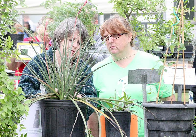 Plant Fair 04