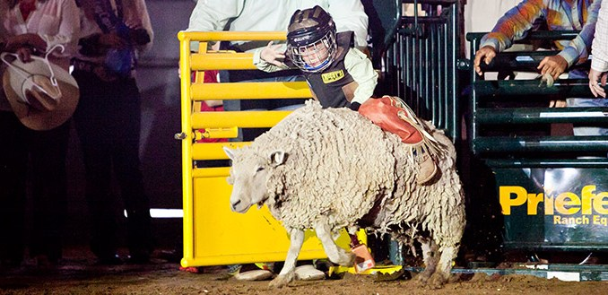 Cowboy Capital Mutton Bustin Set For Saturday At City