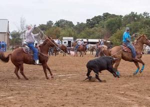 Crawford vet rodeo 13
