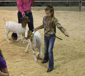 Friday Stock Show 14