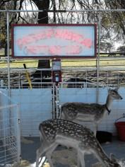 Great American Petting Zoo 2