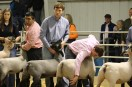 Stock Show (day 2) IMG_0776