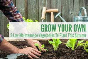 5 Low Maintenance Vegetables To Plant This Autumn