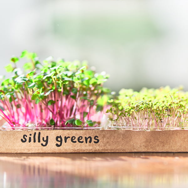 Silly Greens