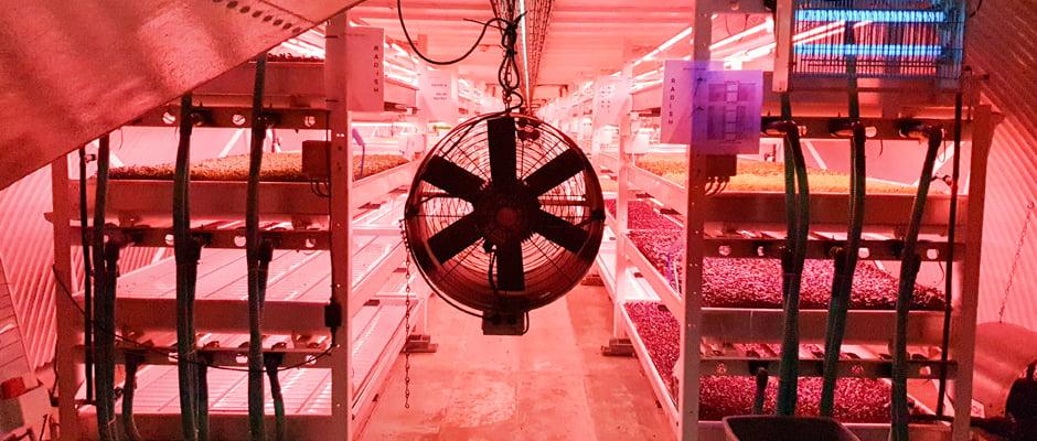 Growing Underground - London's First Underground Farm