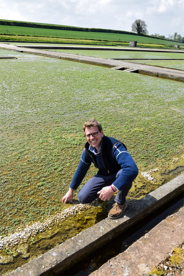 The Watercress Farm - Tom Amery