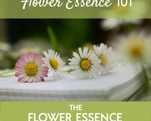 FEP04 Flower Essence 101