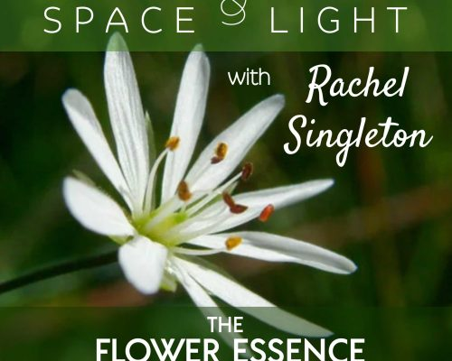 FEP20 Holding Space and Shining Light with Rachel Singleton