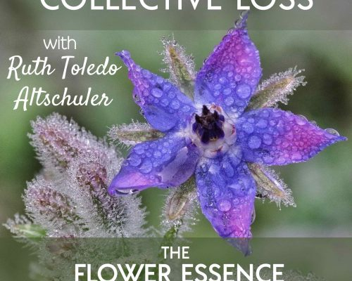 FEP23 Collective Loss with Ruth Toledo Altschuler