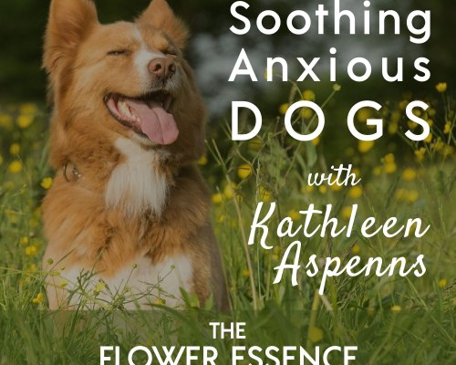 FEP33 Soothing Anxious Dogs with Flower Essences