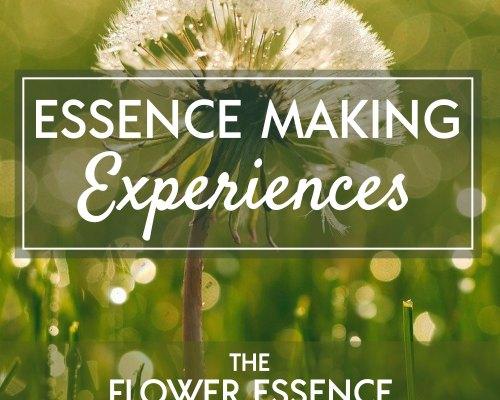 FEP36 Essence Making Experiences