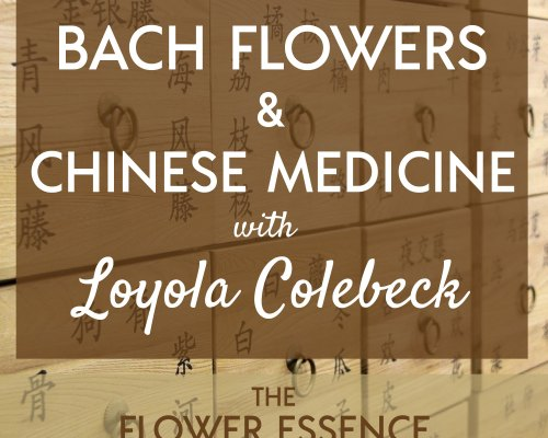 FEP38 Bach Flowers and Chinese Medicine with Loey Colebeck