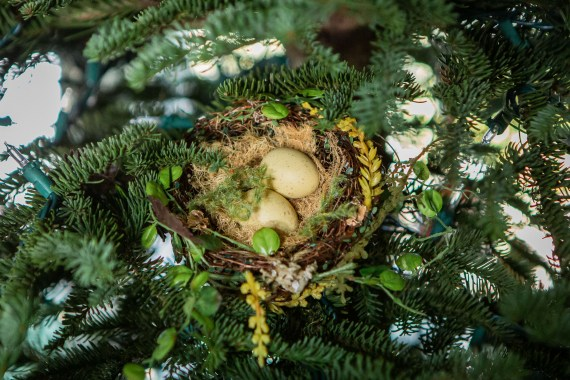 bird nest in Christmas Tree