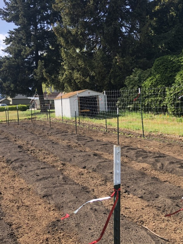 Garden beds amended for dahlia planting
