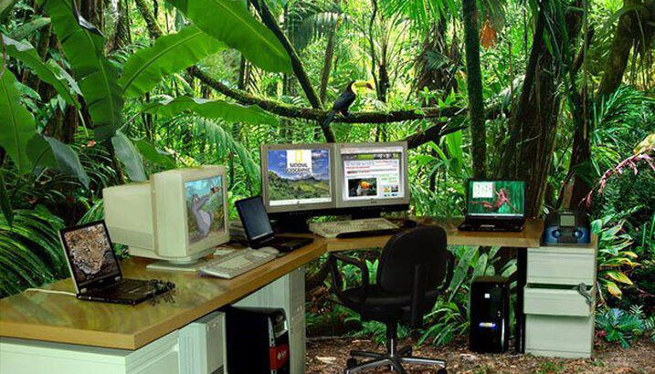 Hyperconnected Jungle