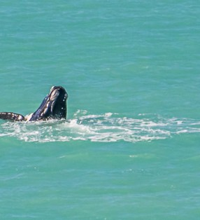 Whales on the Nullarbor