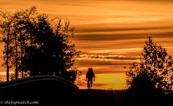 dawn pilgrim