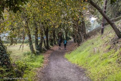 rural track near Sarria