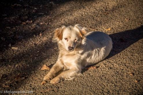 stallholder's dog