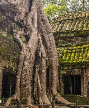 Cambodia – Ta Prohm: An Angkor treasure