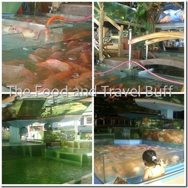 cubao fish store