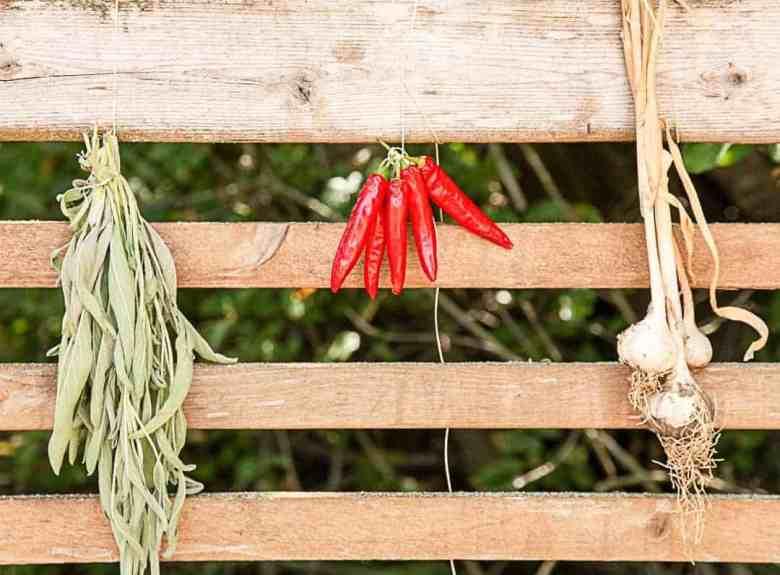 Drying Fresh Sage, Chili, and Garlic