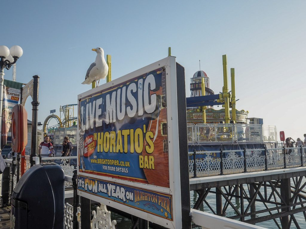 Brighton pier seagull